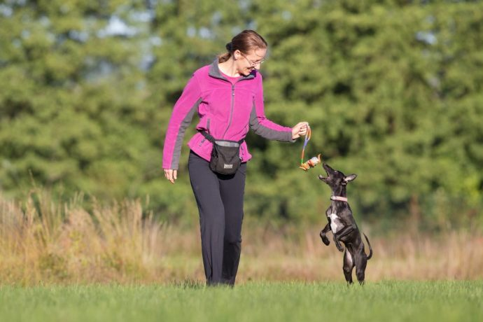 Day 12&13: Why Are Whippets Fast When Running, But Slow In Training?